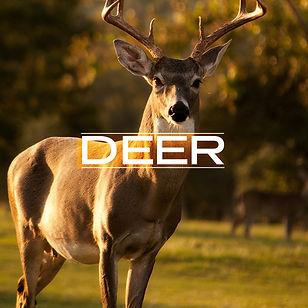 deer_v2.jpg