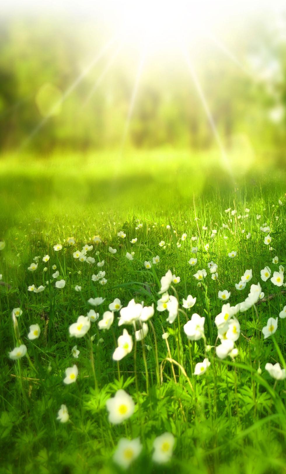 grasslong2.jpg