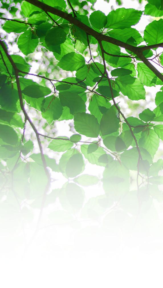 leaveslong.jpg