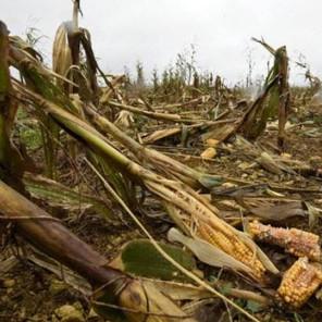 """Retour sur la mission parlementaire """"Dégâts agricoles et forestiers des grands Gibiers"""""""