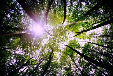 naturopathe paris Bilan de vitalité suivi naturo