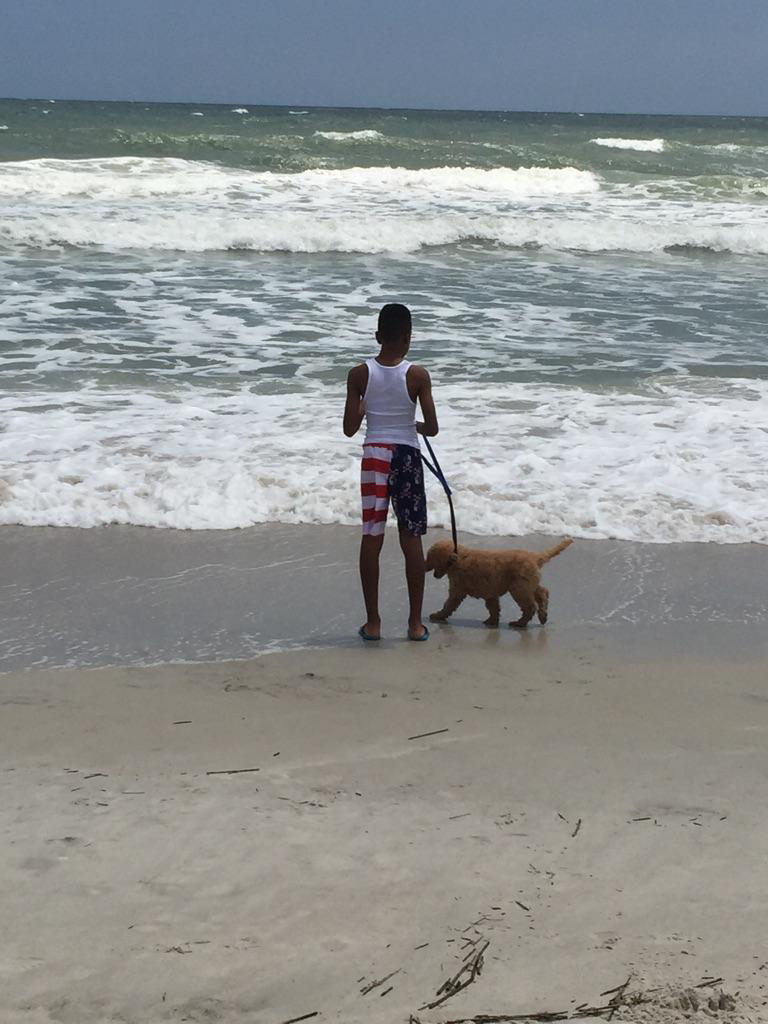 American beach pup.png