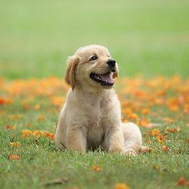 dog-puppy-on-garden-royalty-free-image-1