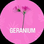 Geranium_1200x.png