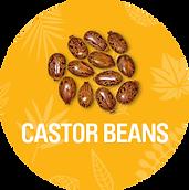 Castor_Beans_1200x.png