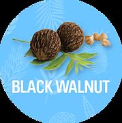 Black_Walnut_1200x.png