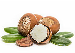 Plant-Therapy-body-creme-sheabutter2.jpg