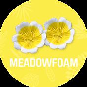 Meadowfoam_533a7df0-af0a-4ce7-aea7-759c0