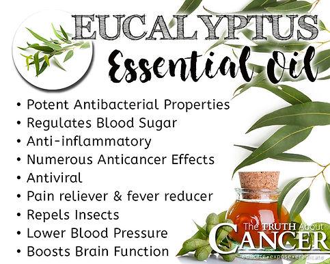 Eucalyptus -benefits.jpg