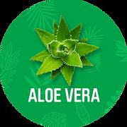 Aloe_Vera_1200x.png
