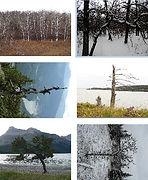 6 trees s1.jpg