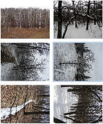 Trees and Trails s1 pack.jpg