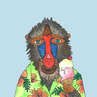baboon blue
