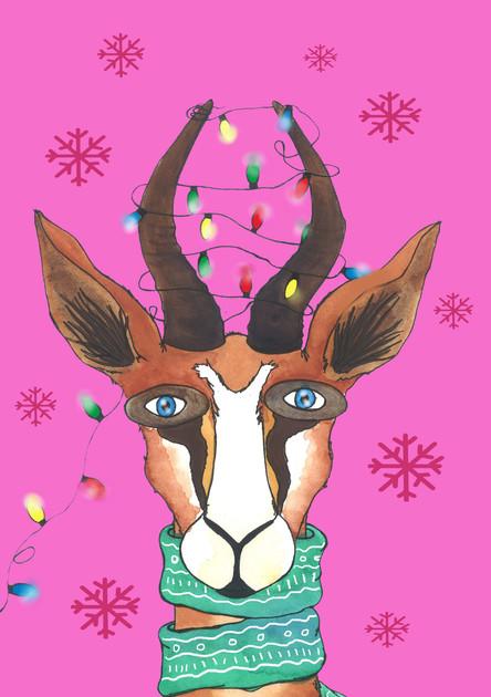 springbok christmas