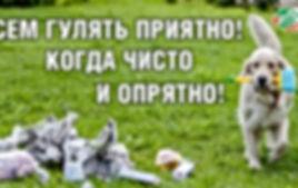 Белая собака с щеткой в зубах,бежит по зеленой траве