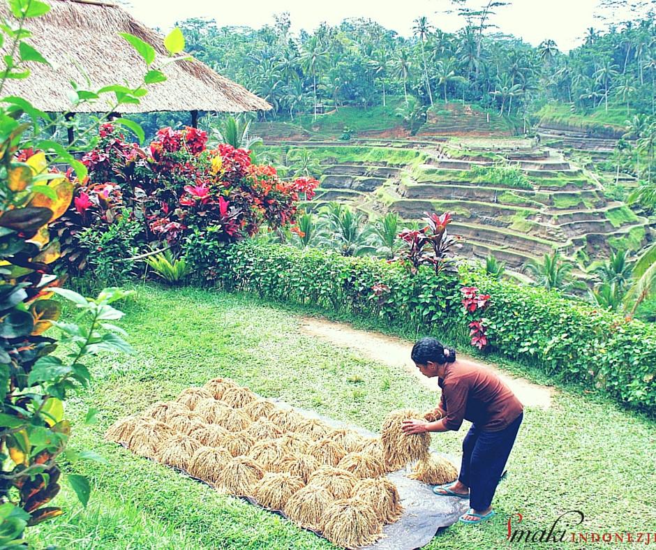 Podróże Kulinarne - Przygoda z Balijską Kuchnią, Smaki Indonezji - Kuchnia Indonezyjska