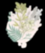 Ecofante_organico-05.png