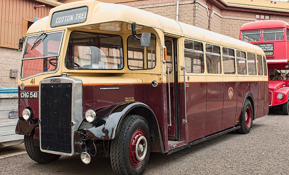 Cotton Tree bus