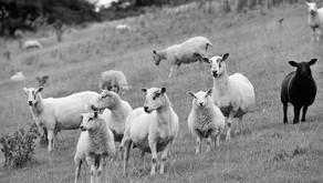 Delivering NetZero in Scottish Agriculture