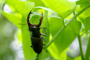 Insects & Arthropods