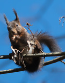 Busy squirrel eating seeds
