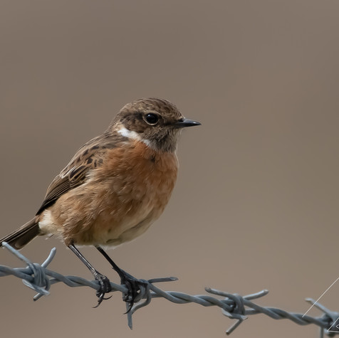 Female Stone chat for a chat