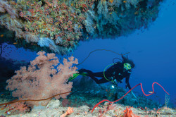 SEE & DO: CORAL REEFS