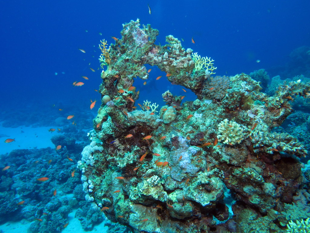 SEE & DO: CAHUITA CORAL REEFS