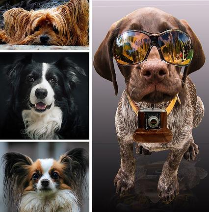 Dog Friendly Luxury Hotels | Wandering Diva | A Luxury Travel Guide