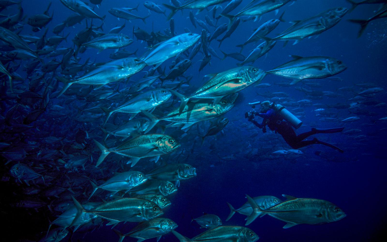 SEE & DO: COCOS ISLAND