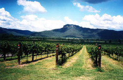 SEE & DO: HUNTER VALLEY