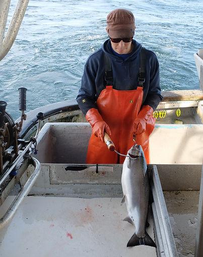 Artisan quality salmon