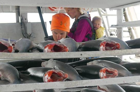 Harvesting wild salmon as a family