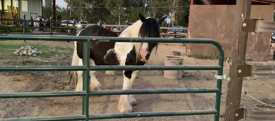 pretty horse.mov
