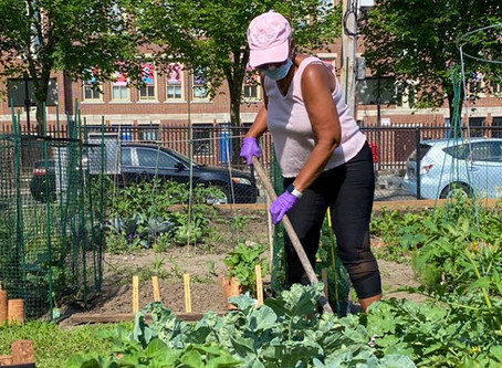 In A Time Of Uncertainty, Bostonians Embrace Their Community Gardens