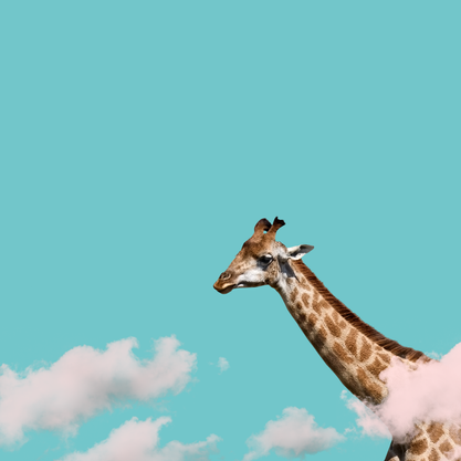Girafa in the Sky