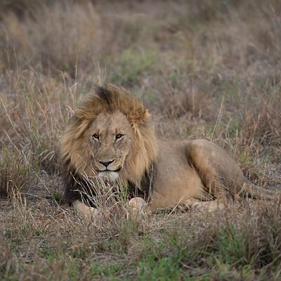 Safari - South Africa
