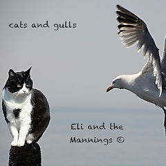 ELI AND THE MANNINGS - CATS AND GULLS