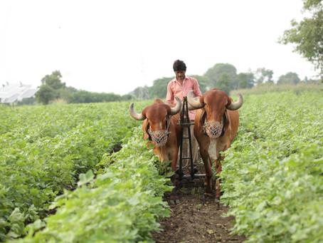 Small Farmers and Livelihoods