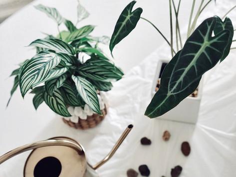 NURTURING NATURE: A PLANT LADY ORIGIN STORY