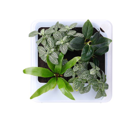 Muji Wall Mount Planter