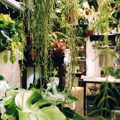 WHERE TO GET YOUR GREENS IN HONG KONG