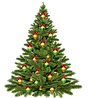 christmas-tree-1808558__340.webp