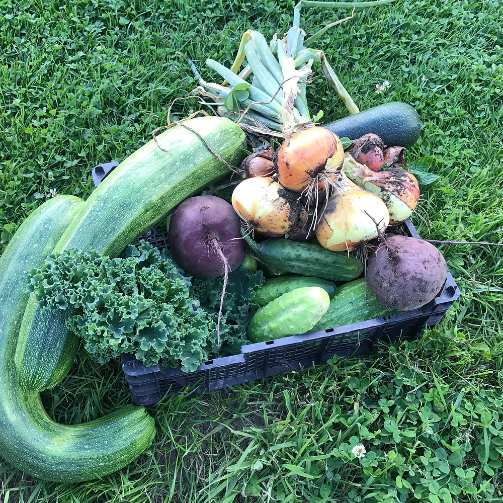 Vegetables from Tony's Allotment