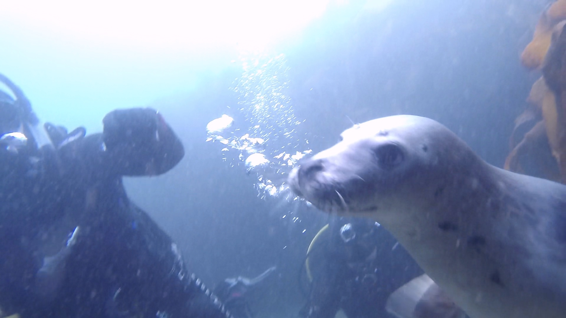 Seal 12