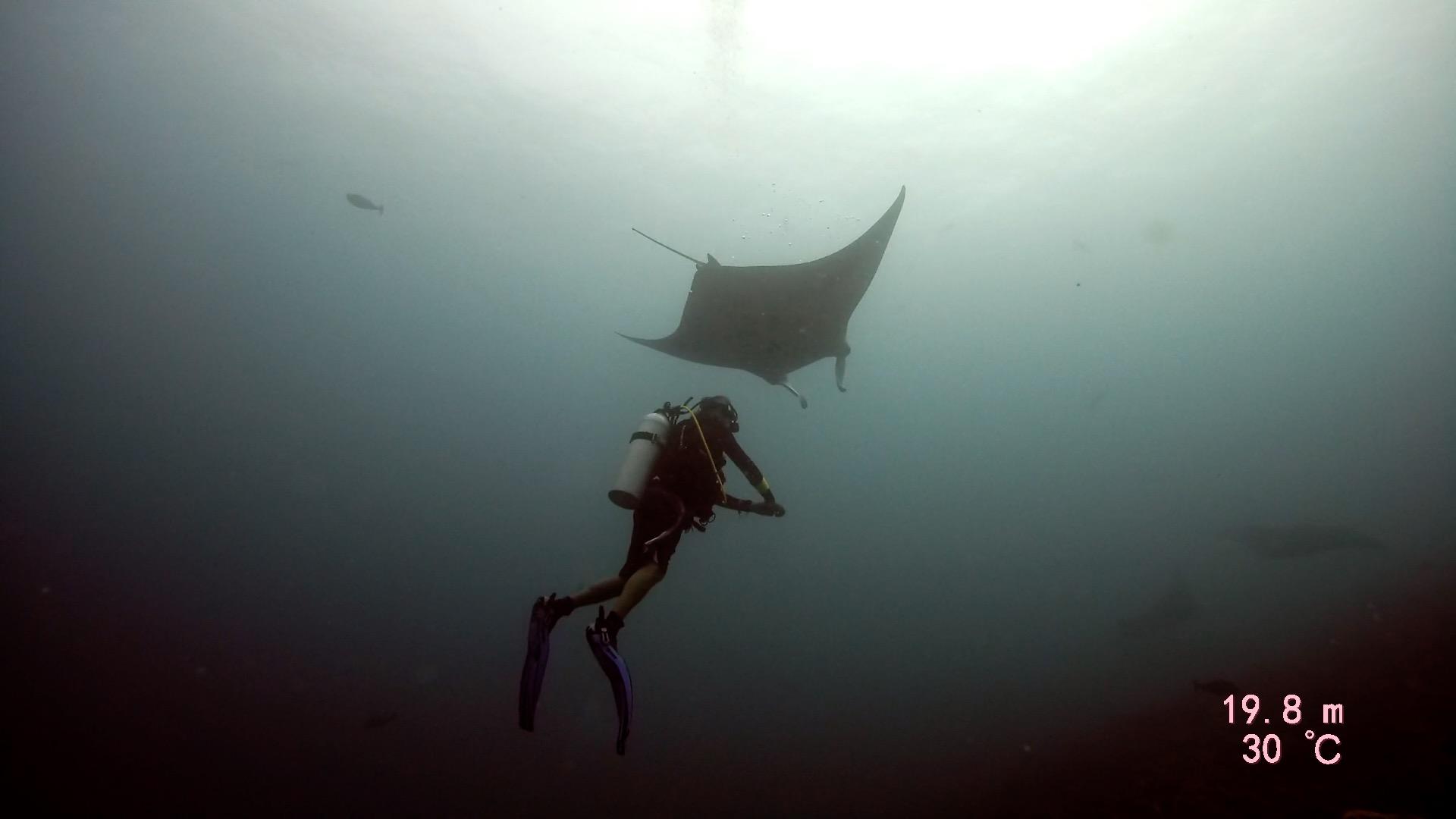 Diver under manta