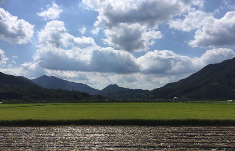 South Korea Cross Country: Day 5 (65km)