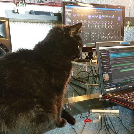 My musical cat