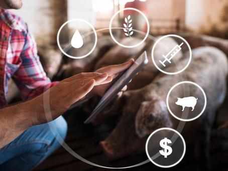 """Vernetzungs- und Transfermaßnahme """"DigiTier – Digitalisierung in der Nutztierhaltung"""" gestartet"""