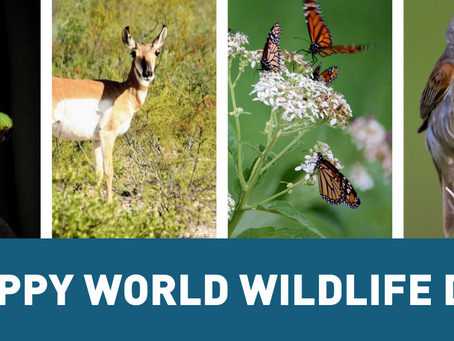 Happy World Wildlife Day!